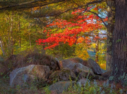 Stones and Maples